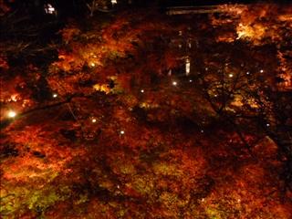 2013-11-29 清水寺 (3)