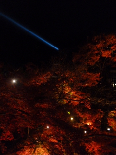 2013-11-29 清水寺 (6)