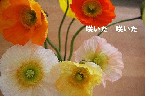 IMG_0391-1-1.jpg