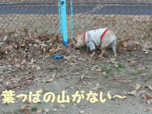 222_14convert_20120117035200.jpg