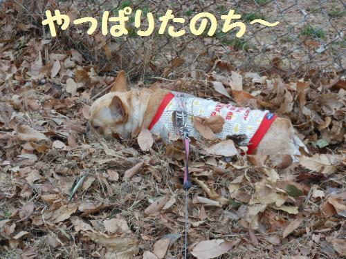 222_18convert_20120117035420.jpg