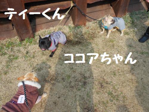 222_6convert_20120123040949.jpg