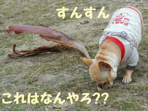 222_8convert_20120117034558.jpg