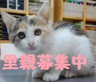 三毛子猫ちゃんba