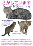 トラくん迷子ポスター2