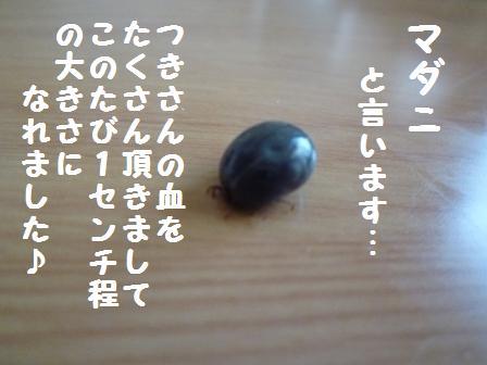 P1020368.jpg