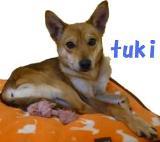 tukisuro_20091221212718.jpg
