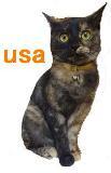 usasiro_20091221212718.jpg