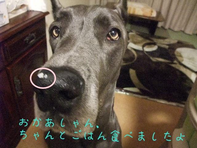 2012_01100008.jpg