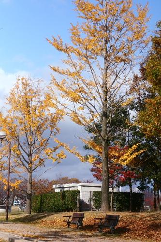 いいね、いいね・・・秋はいいね~♪ってか、自然はいいね~♪