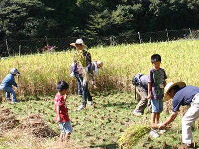 『昔の稲刈り体験』2009年091006c