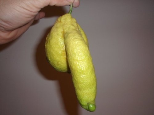 lemon-penis.jpg