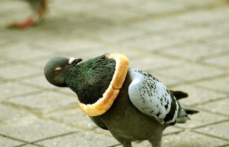 pigeon-bread-necklace.jpg