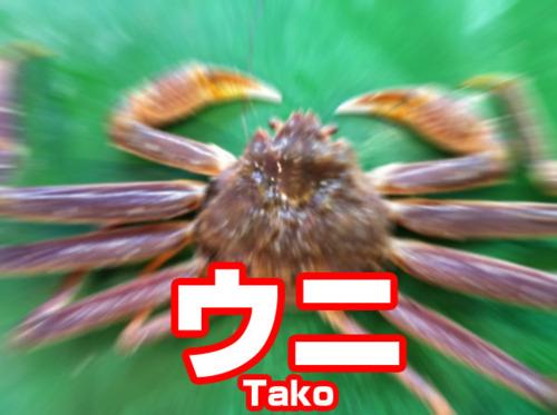 tumblr_lpd4kxfJTf1qzo7e0o1_500.jpg