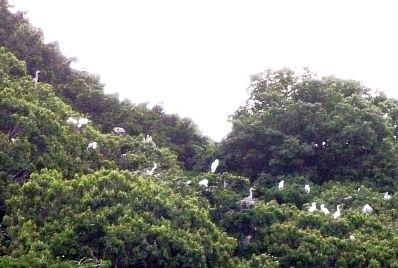 垂仁の鳥たち