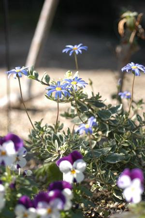 blueg2010103.jpg