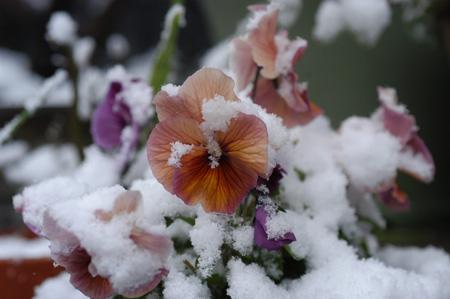 snow20091231-2.jpg