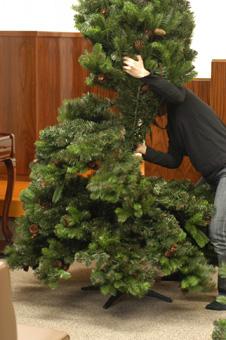 tree_pre20091115-1.jpg