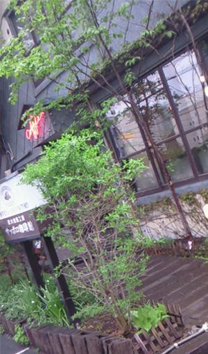 北円山新緑1