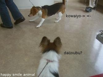 ワンステップ~happy smile animal~