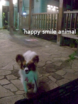 ワンステップ~happy smile animal~