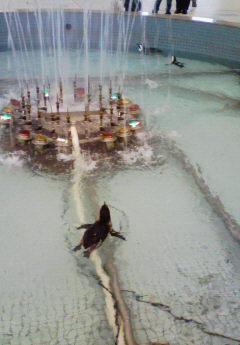 ペンギンAT噴水