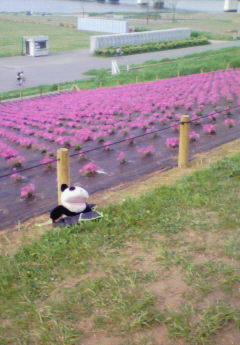 お花を背景に