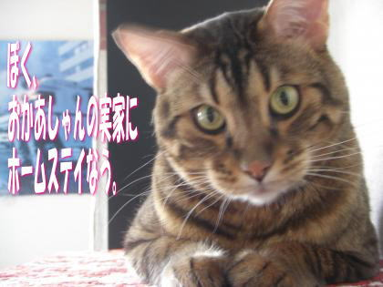 sasuke2011102801.jpg