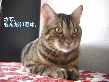 sasuke2011102802.jpg