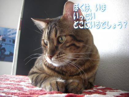 sasuke2011102803.jpg