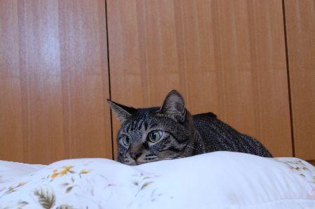 20091115kotetsu.jpg