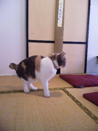 20091118みーちゃん