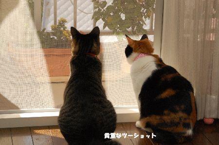 20091121mikankotetsu.jpg
