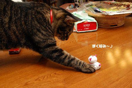 20091123kotetsu.jpg
