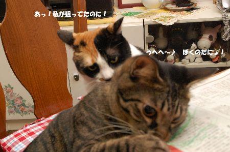 20091127mikankotetsu.jpg