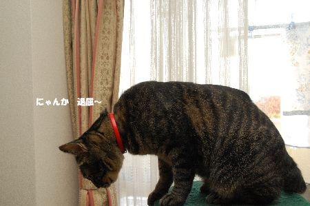 20091202kotetsu.jpg