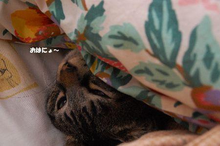20091204kotetsu2.jpg