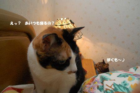 20091204mikankotetsu.jpg