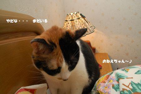 20091204mikankotetsu2.jpg