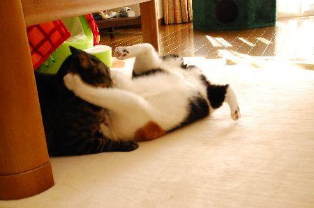 20091213mikankotetsu2.jpg