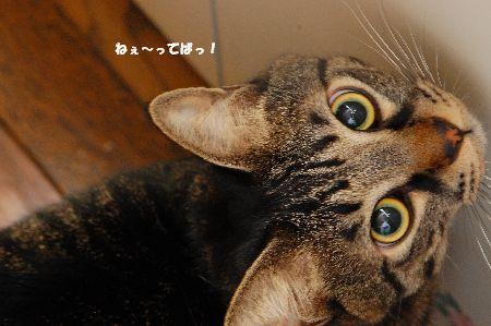 20091218kotetsu.jpg