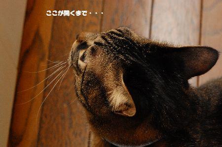 20091218kotetsu2.jpg