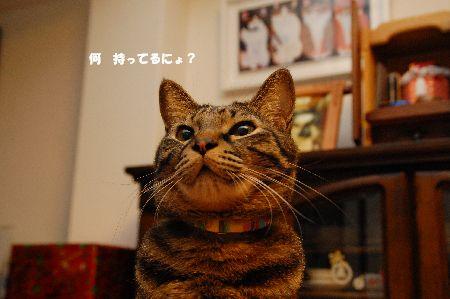20101217kotetsu.jpg