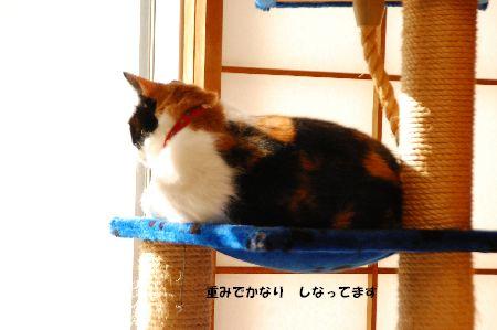 20101228mikan2.jpg