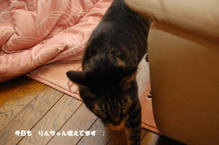 20110110kotetsu3.jpg