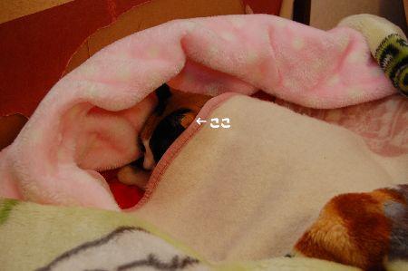 20110114mikan2.jpg