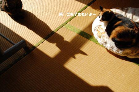 20110118mikankotetsu.jpg
