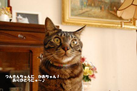 20110119kotetsu3.jpg