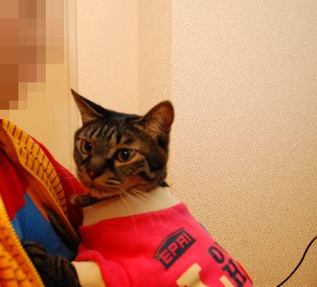 20110327kotetsu2.jpg