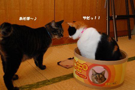 20110416mikankotetsu.jpg
